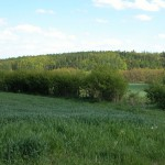 Okolní lesy a příroda 3 e1422220098407